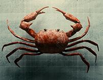 Just a crab