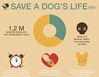 Shelter Dog Infographic