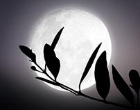 Harvest by Moonlight, Gallo