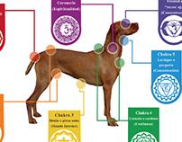 Infografía Chakras en perros