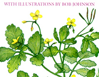 Botanical Art by B. Johnson
