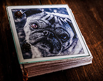 The Glass Book of Otis by Anjani Millet