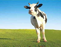 Mahanand Josh Flavoured Milk