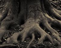 Darken Roots