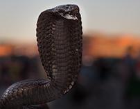 Snake Charmers In Marrakech !