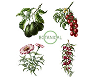 Botanical engraving illustration of plant