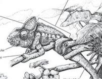 Illustration Plate: Flora & Fauna: Oustalet's Chameleon