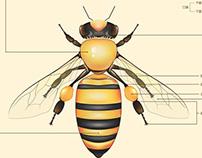 蜜蜂信息图