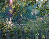 Hampstead Heath Series #1 - Flora and Fauna