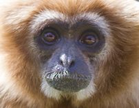 Owl & Monkey Haven 2013