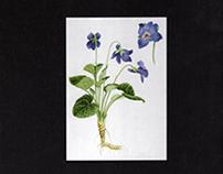 Medicinal Plants of Galice