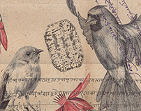 'flock together' bic biro drawing on an antique Indian