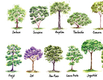 Watercolor Trees for Xiloteca