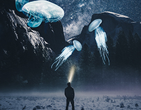 JELLYFISHES AT NIGHT
