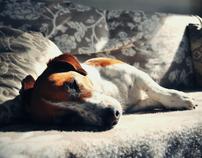 Billiedog