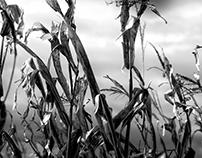 Rural Stalks