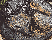 Sleeping Swift Fox