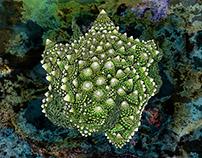 Reinterpretation green cauliflower