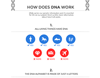 Infographic - How DNA Works