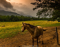 Re-edit of Wet Meadows and Muddy Roads in Cade's Cove