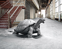 USG Concrete Tortoise