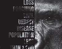 The Gorilla Organisation / Informative Posters