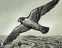 Peregrine Illustrations