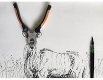 广袤的非洲大草原上,雨季刚刚过去,一只非洲大羚羊正…………!