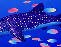 Oceans Business Week 2016