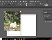 How to Make a Picture Bleed--with Adobe InDesign