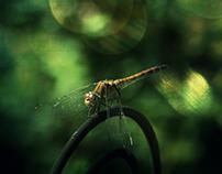 Libellen | Dragonflies