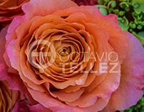Garden Style Floral Design