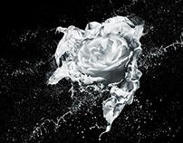 White Rose Splash