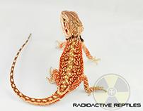 MOoorre Reptiles