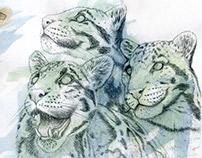nebulosa (clouded leopards)
