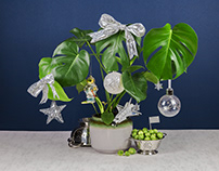 Christmas Plant