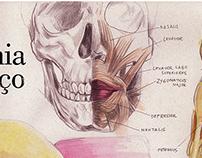 Anatomia do palhaço