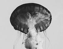 Jellyfish : Exploration