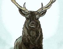 Deer - Personal Project