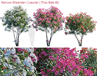 Nerium Oleander | Laurier