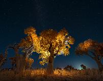Autumn·XinJiang
