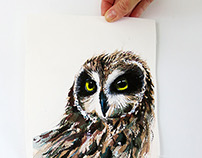 The gaze of the short eared owl