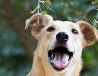 Portraits of Rescued Dogs