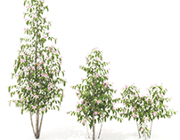 Flowering plant 3D