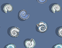 Hand drawn sea and molluscan shells patterns