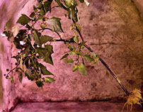 naked plants