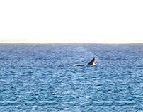 My Humpback Whale
