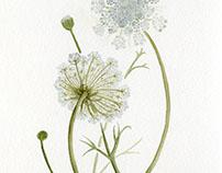 All Things Botanical