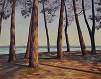 Ombres de pins