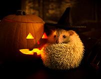 Hedgehog Halloween